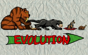 Evolution of the human feline dynamic